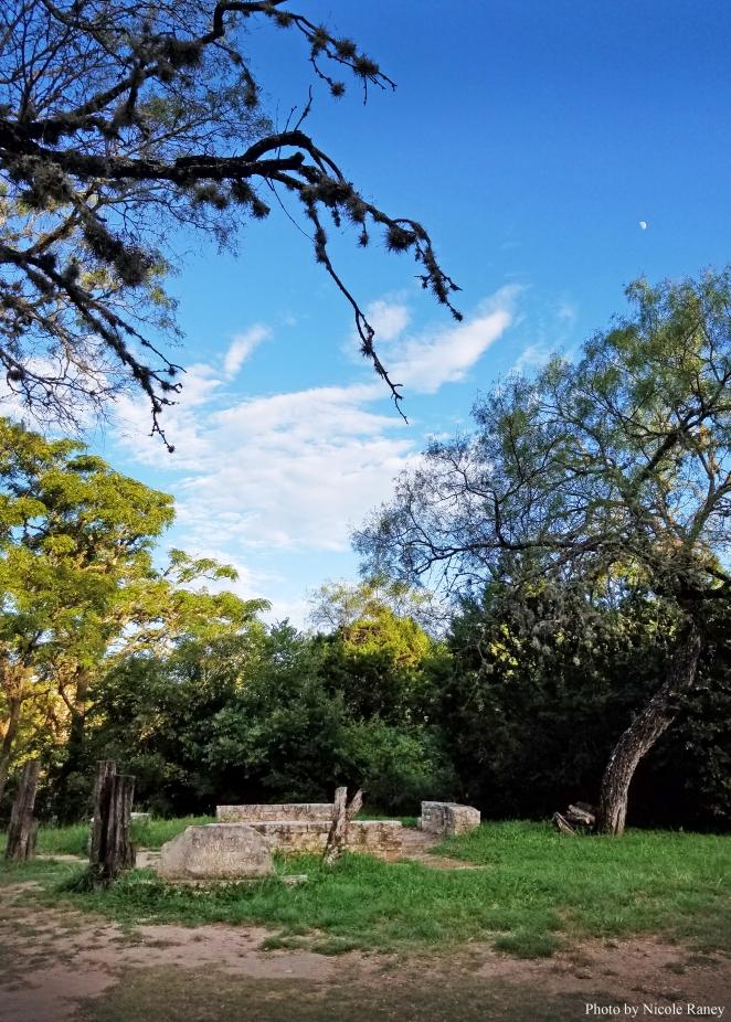 luckenbach-trees-moon