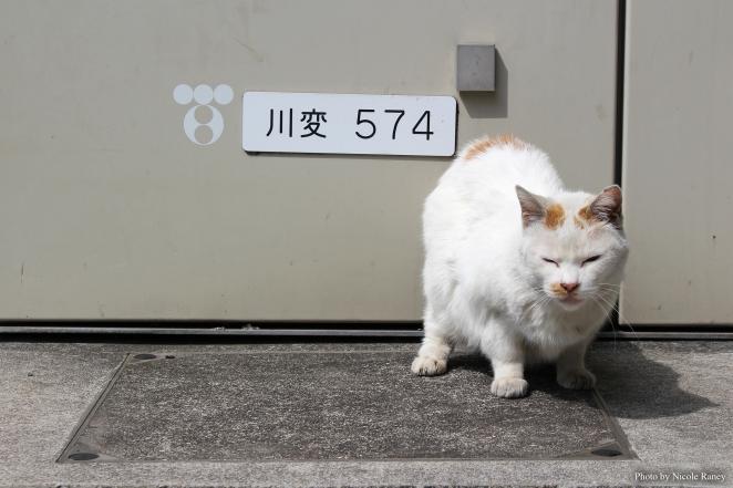 ed kawasaki cat